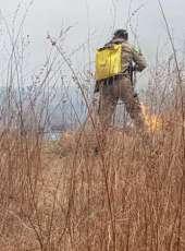 Corpo de Bombeiros debela incêndio em vegetação entre Crateús e Independência