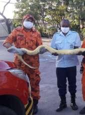 Moradores acionam Corpo de Bombeiros para fazer resgate de cobra no bairro Jangurussu