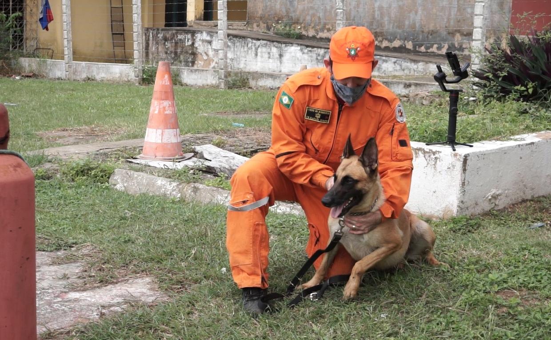 Heróis de quatro patas em destaque nas forças da segurança pública do Estado